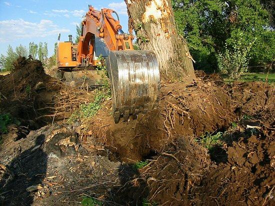 De boom op onze erfscheiding wordt uitgegraven