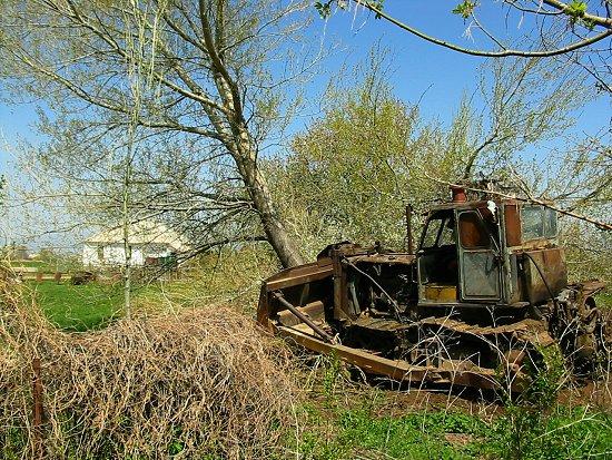Foto van het omduwen van een boom met de bulldozer