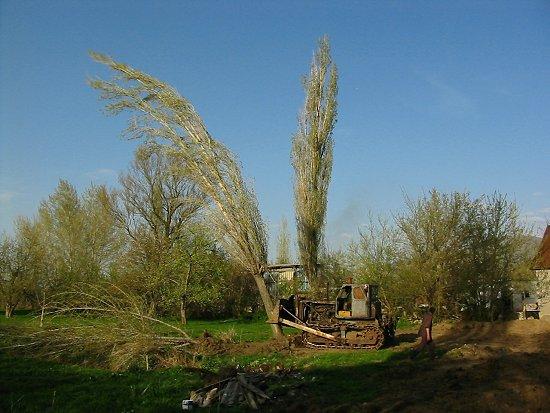 Foto van een zwiepende hoge boom die wordt omgeduwd