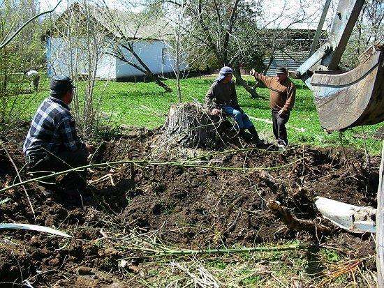 Foto van vergadering voor het verwijderen van de boomstronk