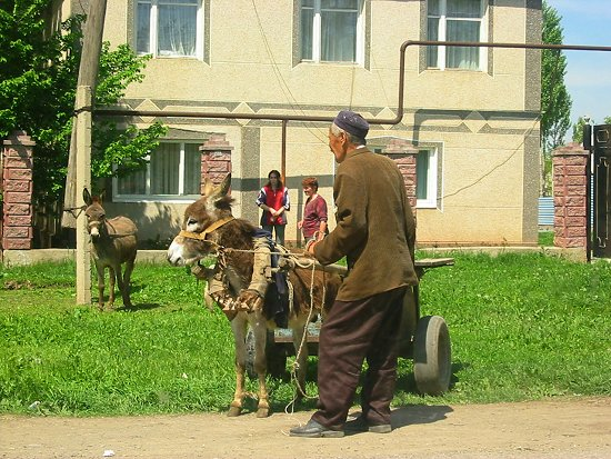 Verliefde ezels