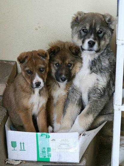 Honden in de doos