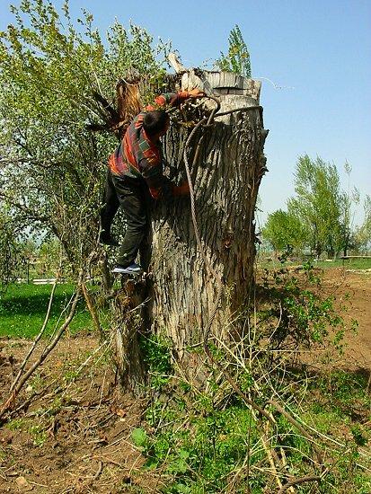 Foto van Ruslan die een staalkabel rond een boom knoopt