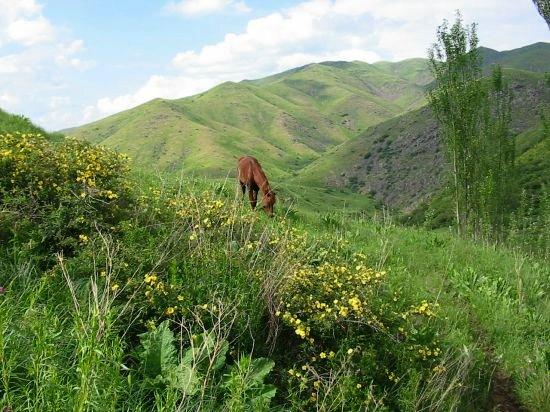 Paard op berghelling