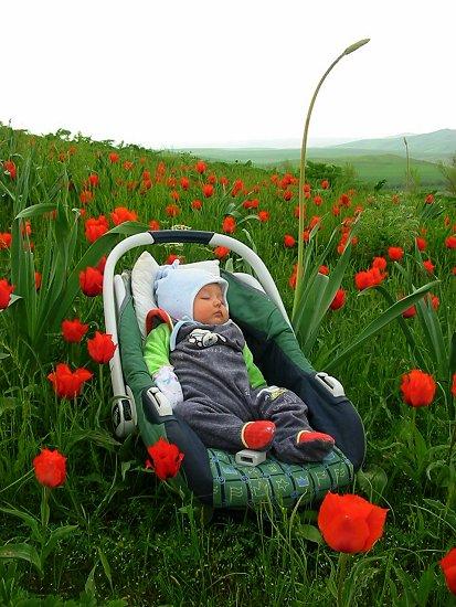 Roos tussen de tulpen