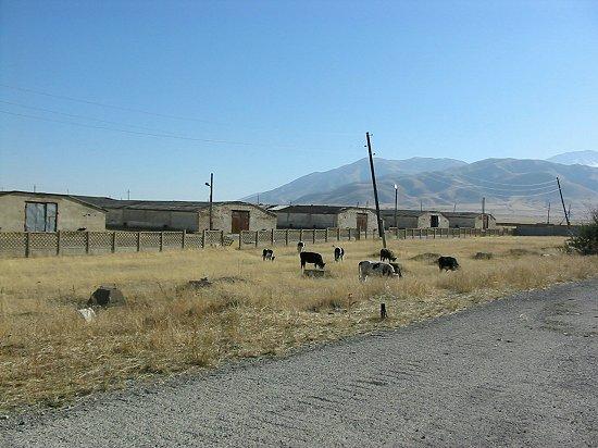 Stallen van de kippenslachterij in Zhabagly