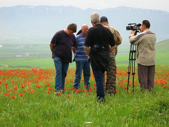 Televisie interview tussen de tulpen