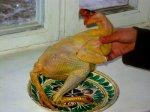 Geslacht kip