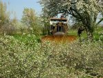 Kersenboom geplet