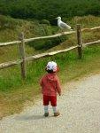 Meeuw op een hek