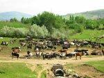 Drenkplaats voor het vee